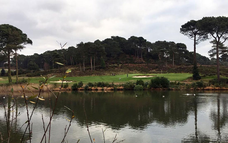 Parkstone Golf Club accused of felling protected trees (and the saga continues)